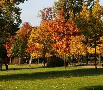 Złota jesień na Dolnym Śląsku do końca października