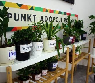 Punkt adopcji roślin w Galerii Łomianki. Oddaj, nie wyrzucaj