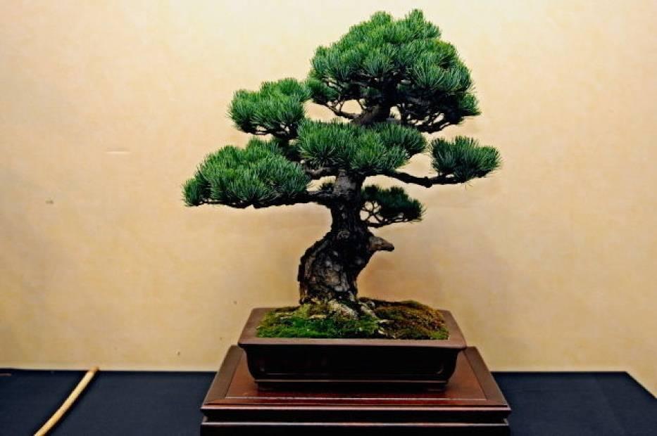Wystawa i warsztaty Bonsai