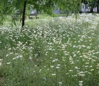 Zielone ściany, łąki kwietne, a teraz czas na ogrody kieszonkowe. Gdzie powstaną?