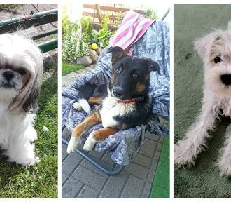 Dzień psa - 1 lipca 2021. Zdjęcia psów naszych czytelników