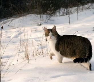 Kiedy spadnie pierwszy śnieg? Wszystko wskazuje na to, że 9 listopada [PROGNOZA POGODY]