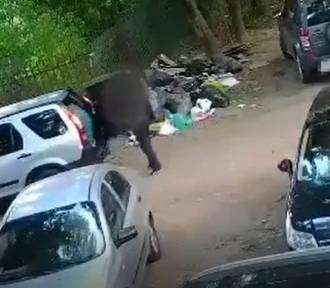 Chciał się pozbyć śmieci na dzikim wysypisku, wpadł w fotopułapkę