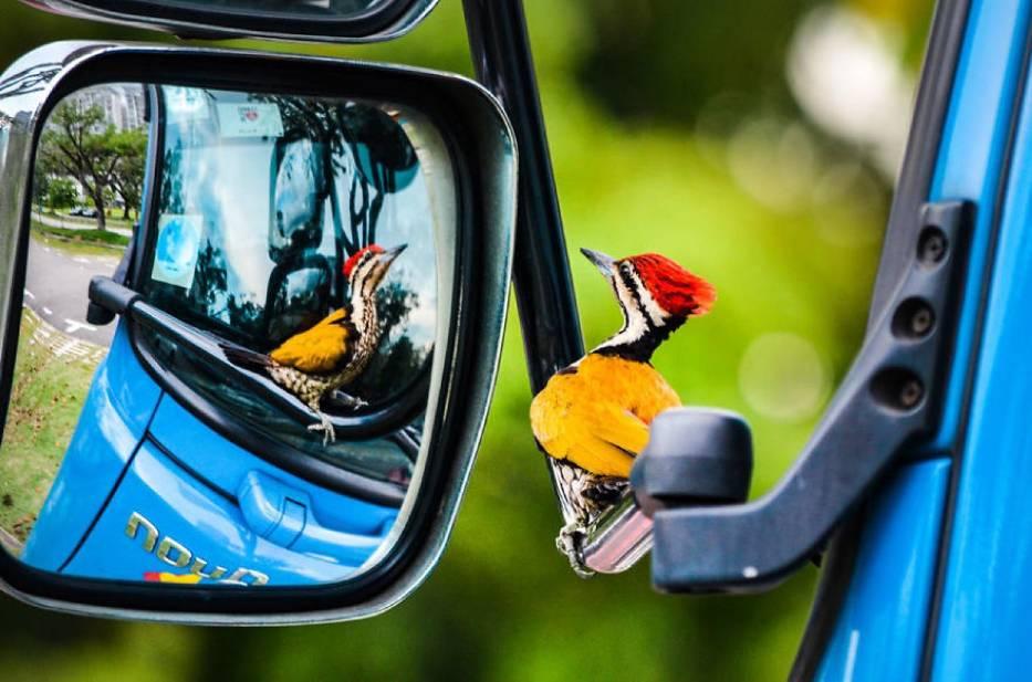 Obserwowanie ptaków jest nudne? Wykluczone. Oto cała galeria dowodów