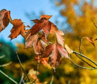Pogoda na jesień i początek zimy. Ciepły październik i listopad i szybka zima?