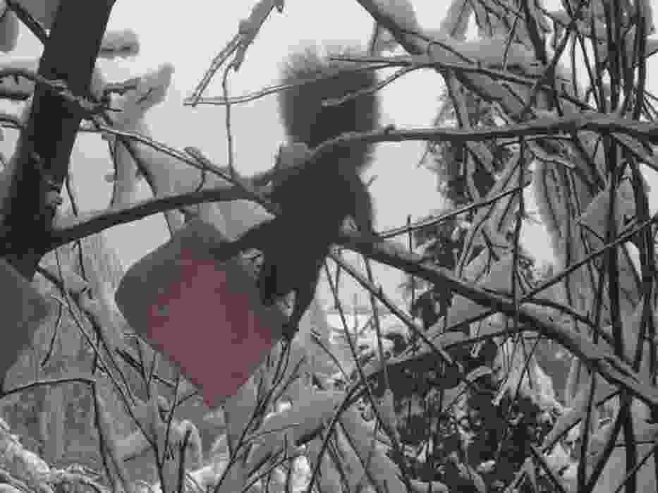 Wiewiórka w ptasiej stołówce