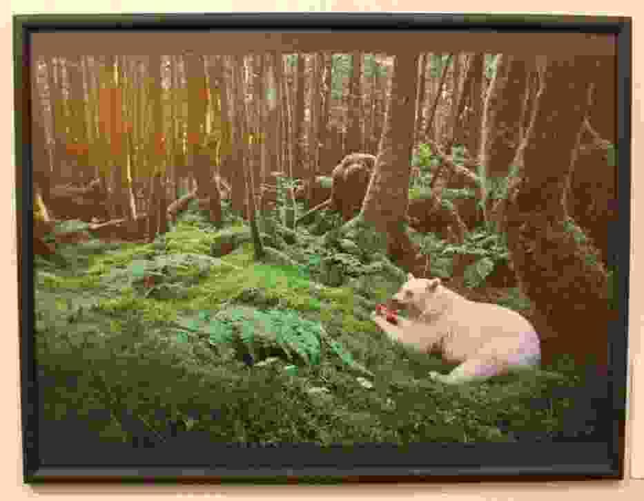Duch puszczy - Paul Nicklen, Kanada