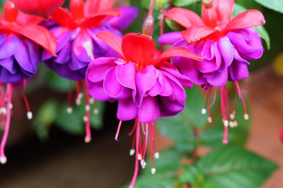 Jest sporo gatunków roślin, które wolą cień lub półcień od palącego słońca
