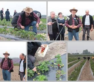 W powiecie lipnowskim minister rolnictwa dał przykład nauczycielom, jak zbierać truskawki [zdjęcia,