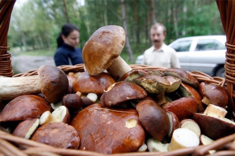 Zwykle pierwsza połowa września to dopiero początek sezonu grzybowego, ale w tym roku w wielkopolskich lasach już jest co zbierać