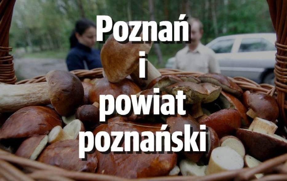PoznańW poznańskich lasach pojawiły się już borowiki, podgrzybki, koźlaki i maślaki