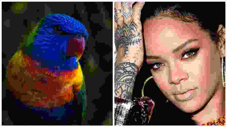 """Oto papuga, która śpiewa """"Monster"""" Rihanny lepiej niż Wy. Posłuchajcie sami [WIDEO]"""