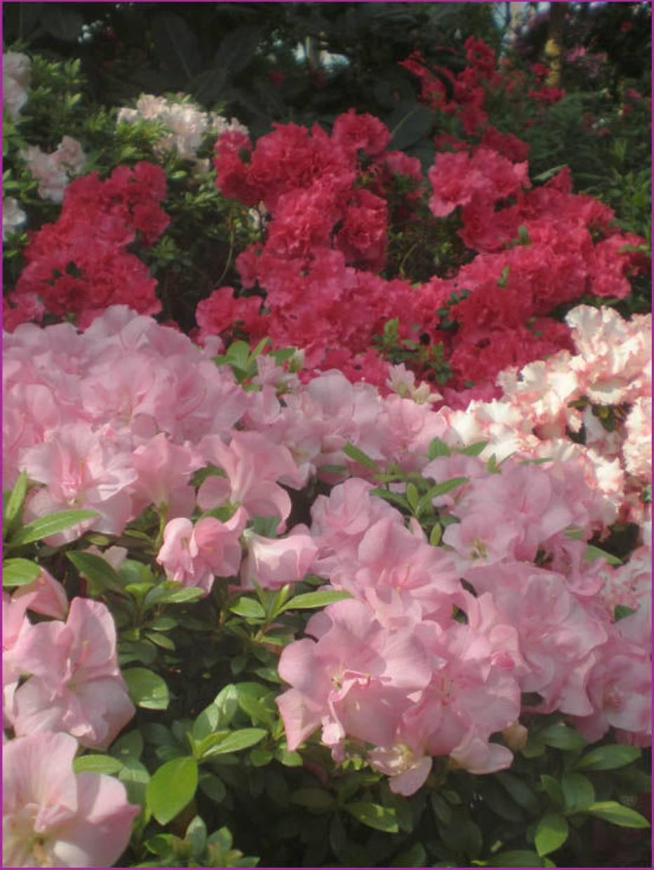 Kwiaty herbaciane