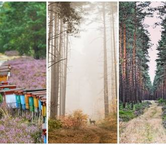 Bory Dolnośląskie zachwycają obfitością barw. Zobacz przepiękne zdjęcia Instagramerów