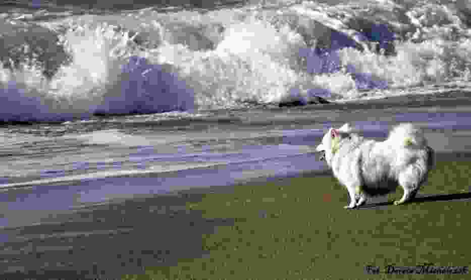 W dzień biały morze śpiewa, szepce i szeleści,samemu sobie jeno gwarząc opowieści