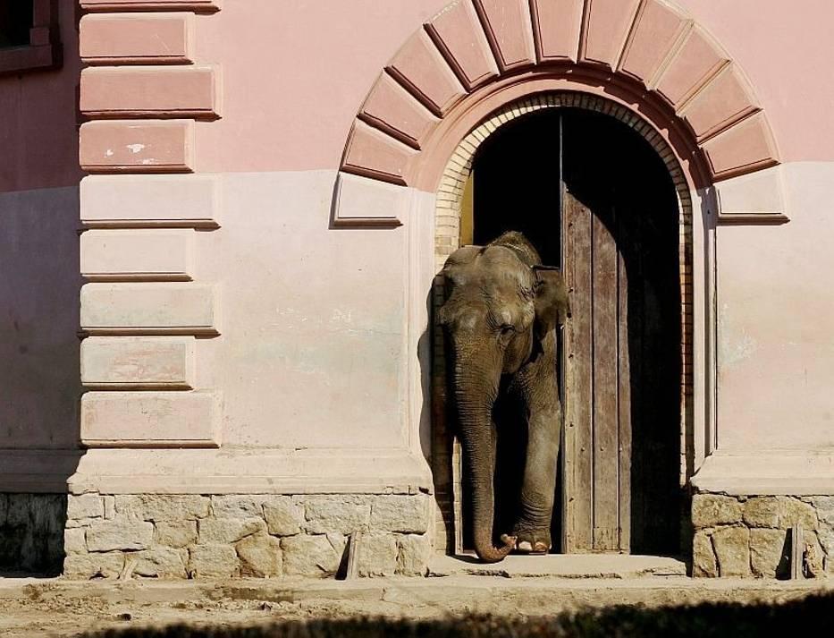 Ciekawe, co Birma na to, że gotuje dla niej sam szef zoo