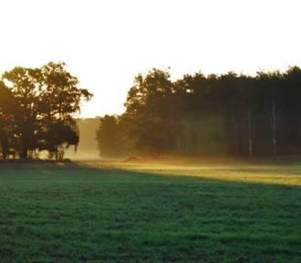 Pogoda w Śremie: sprawdźcie, czy złota polska jesień wróciła na dobre [PROGNOZA 06-10.11]