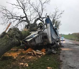 Wypadek na drodze nr 242 pod Szczerbinem. Ciężarówka wjechała w drzewo
