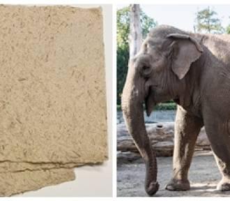 W Dusznikach-Zdroju robią papier z... kupy słoni z wrocławskiego zoo (SZCZEGÓŁY)