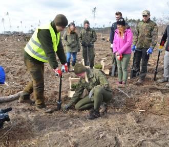 Studenci z Poznania pomogą w odnawianiu naszych lasów. Dziś rozpoczęli akcję sadzenia drzew