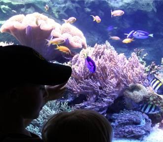 Światowy Dzień Oceanów w Gdyni. Atrakcje w Oceanarium i przy plaży w Śródmieściu [program]