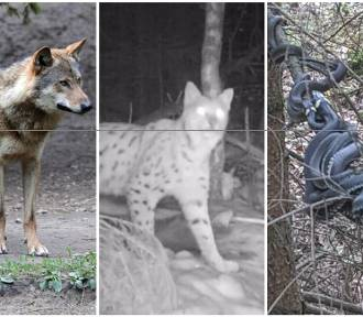 Co się czai w lasach na Dolnym Śląsku? Leśnicy ostrzegają zanim pójdziecie do lasu