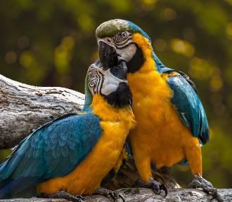 Papugi, bażanty lub bociany. Jakie okazy ptaków możesz kupić w naszym regionie?
