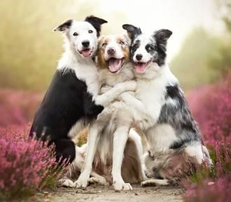 Zdjęcia psów autorstwa 20-latki z Rudy Śl.