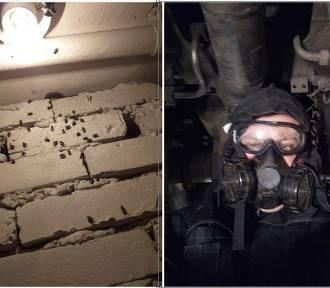 Przeraźliwy fetor śmierci towarzyszy mieszkańcom Fortecznej, mają dość much i larw