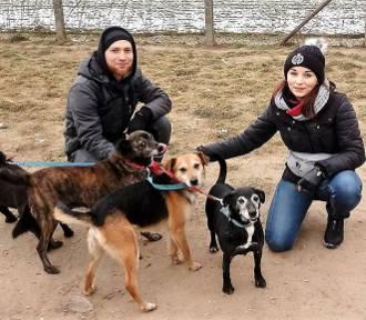 Spacerowy rekord tej zimy w schronisku dla psów [ZDJĘCIA]