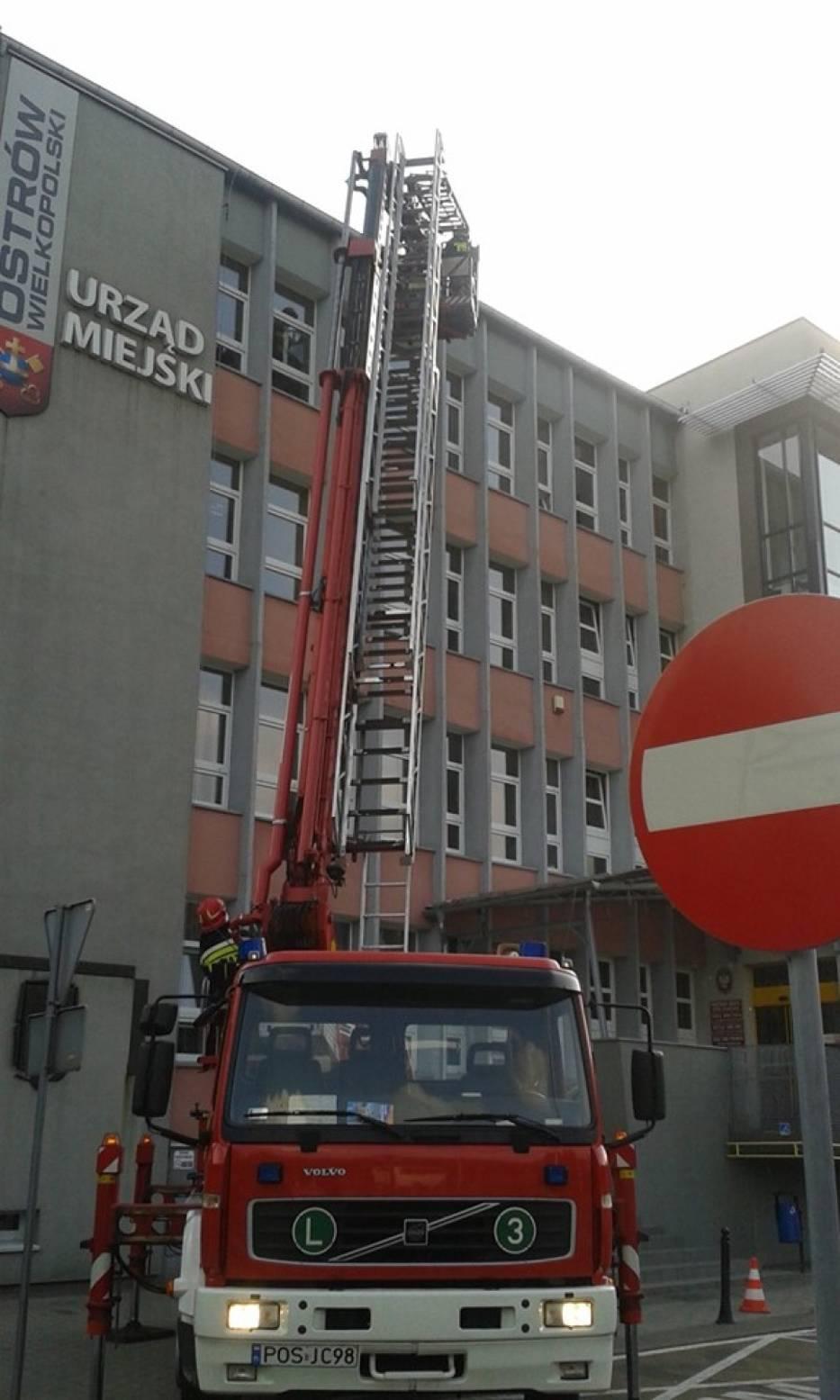 Akcja ratunkowa młodej jaskółki oknówki 25