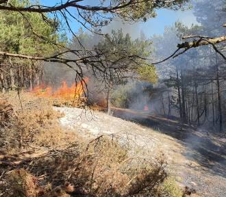 Pożar w rezerwacie Białogóra: spaleniu uległo ponad 2 tys. m2 lasu