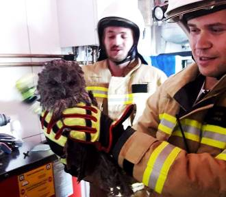Sowa utknęła w kominie domu jednorodzinnego w Grybowie. Ptaka uratowali strażacy