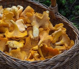 Gdzie szukać grzybów w lesie? Sprawdź!