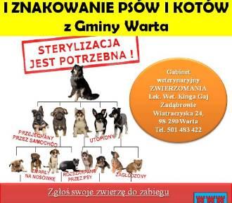 Gmina Warta oferuje bezpłatne zabiegi dla psów i kotów. Liczba miejsc ograniczona