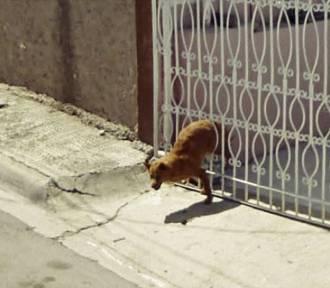 Zwierzaki przyłapane przez Google Street View [ZDJĘCIA]