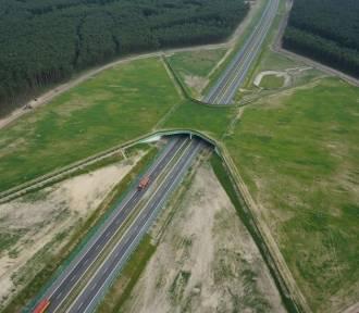 Jak zwierzęta pokonują autostrady? Zobaczcie niezwykłe zdjęcia z lotu ptaka!