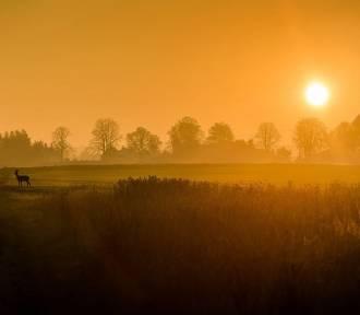 950 niezwykłych zdjęć z lubelskiego. Zobacz te najlepsze