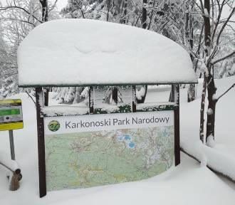 Zamknięty Wąwóz Kamieńczyka, zasypane szlaki.W Karkonoszach śniegu wciąż przybywa! [ZDJĘCIA]