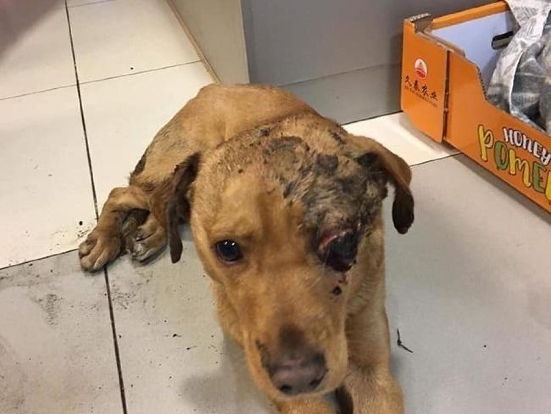 Ten pies był zakopany w okolicy wsi Borowiec i Różanówka w gminie Siedlisko 6 stycznia 2019 roku