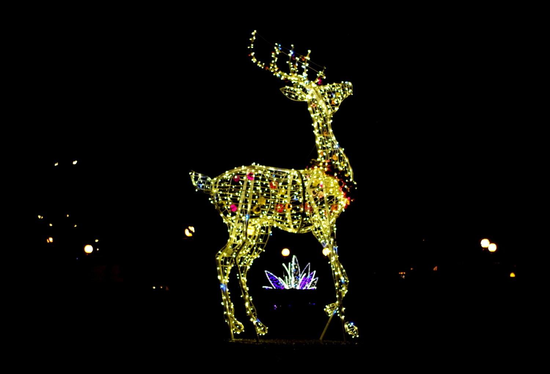 Świąteczne iluminacje rozświetlają Tarnobrzeg po zmroku. Widzieliście? (ZDJĘCIA)