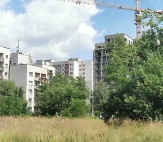 Wiszące ogrody i winnica na dachu w Katowicach