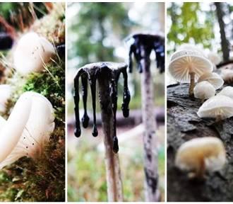 Fascynujące i dziwne rośliny oraz grzyby na szlakach w Karkonoszach. Zobaczcie