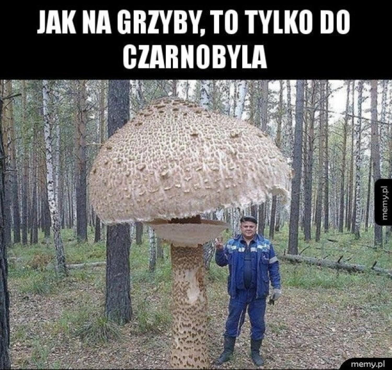 Zobacz memy o grzybobraniu