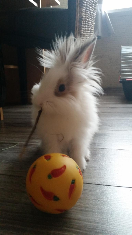 Nasz króliś- Trusinek:)