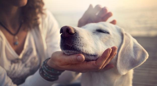 Co twój pies o tobie myśli? PSYCHOZABAWA