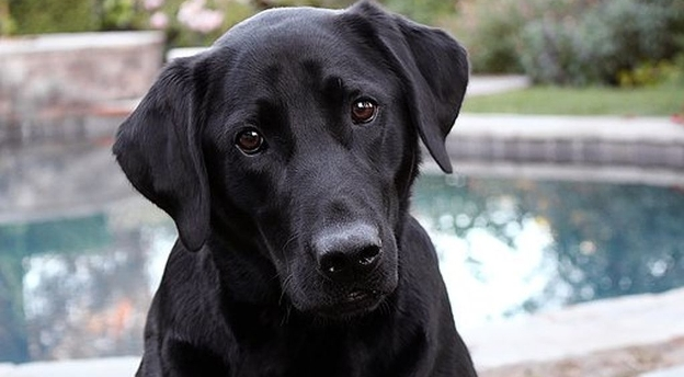 Czy wiesz, jaka to jest rasa psa? Zgaduj! [quiz]