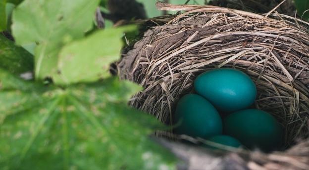 Czy wiesz, co się wykluje z tego jajka? QUIZ