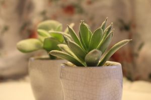 Czy ta roślinka jest sztuczna, czy prawdziwa?