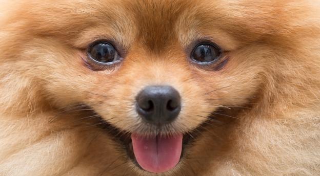 Test wiedzy o psach. Tylko dla prawdziwych psiarzy! QUIZ